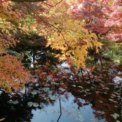 宇治市植物園の紅葉の記事に添付されている画像