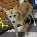 #雑種犬の画像