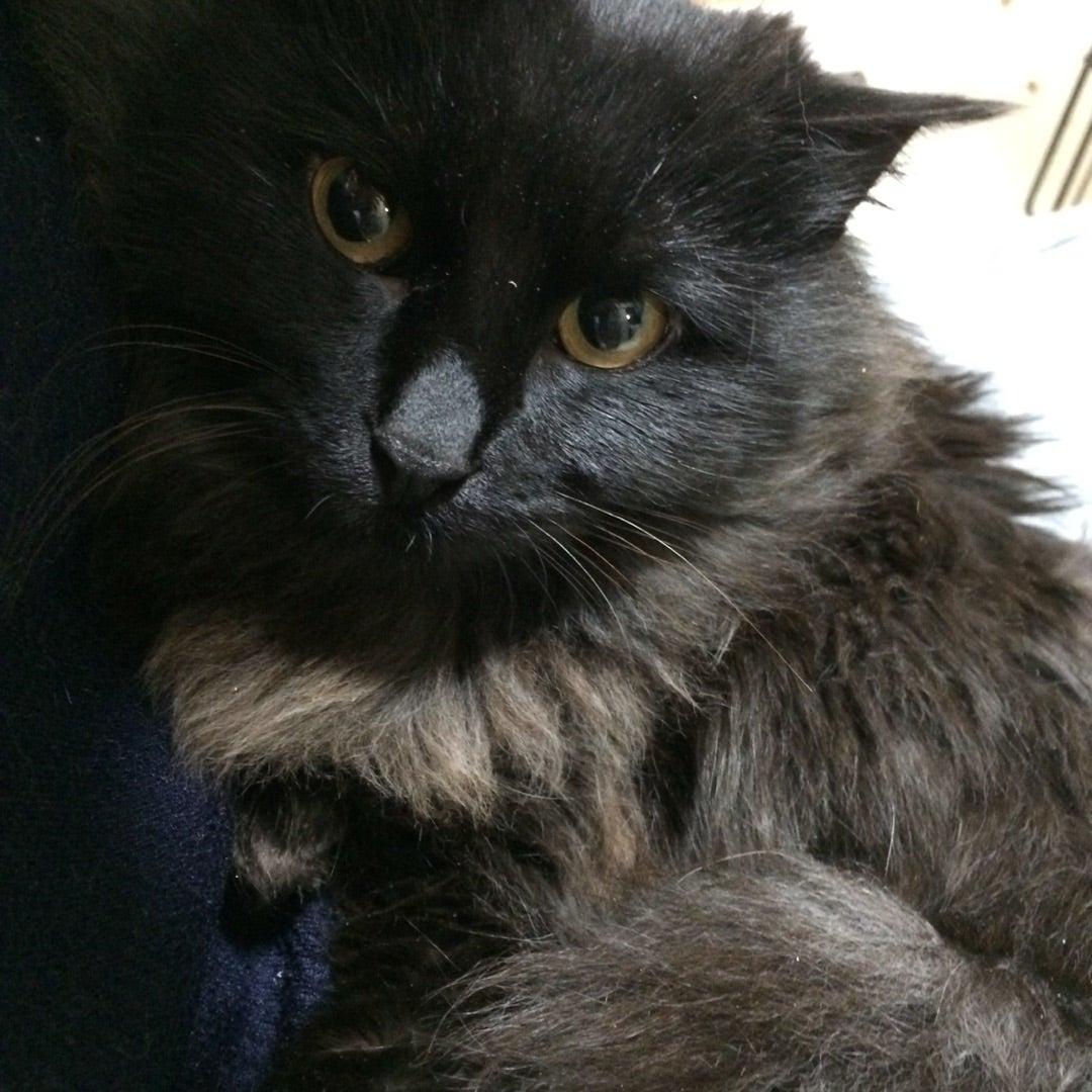 黒猫長毛は「ゴリ 赤木」