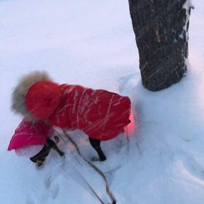 吹雪のお散歩の記事に添付されている画像