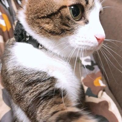 今朝の柚子(๑°꒵°๑)・*♡の記事に添付されている画像