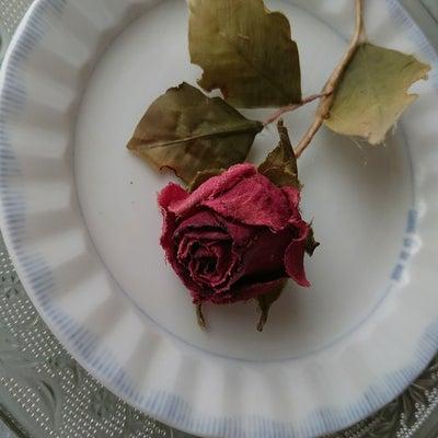 ドライの薔薇の記事に添付されている画像