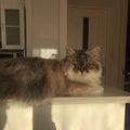 #チェシャ猫の画像