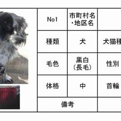 茨城センター 犬猫収容情報 1/4~1/15までの記事に添付されている画像