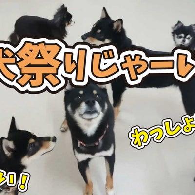黒犬祭りじゃーーーい!わっしょい!わっしょい! 【ひみつきちなう!②】2019年の記事に添付されている画像