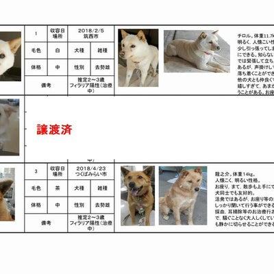 茨城センター 犬の譲渡情報(2018年12月)の記事に添付されている画像
