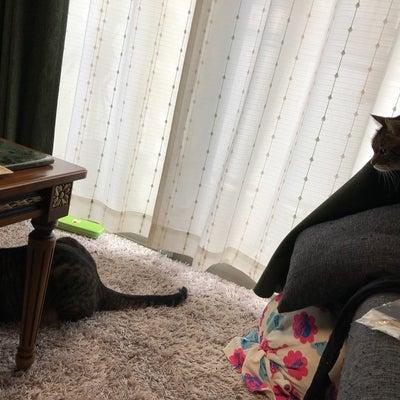 猫同士の対応の記事に添付されている画像