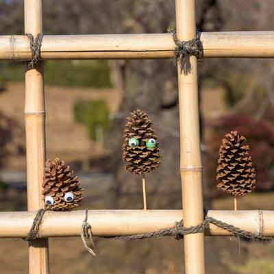 神代植物公園 ① かわいい松ぼっくりの記事に添付されている画像