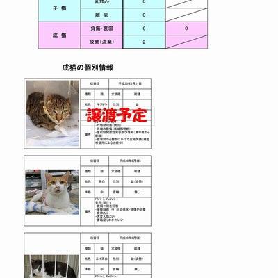 茨城センター 猫の譲渡情報(2018年12月25日現在)の記事に添付されている画像