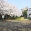 入学入園おめでとう撮影会のご案内の画像