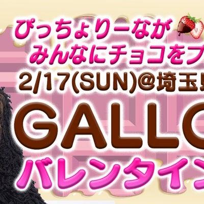 埼玉県で開催されるサバゲイベントに☆ゲスト☆出演するよんんの記事に添付されている画像