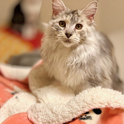 猫も人間も幸せになれる、毛布選びの記事に添付されている画像