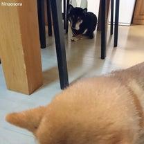 ささやかな場所がお気に入りの常識犬の記事に添付されている画像