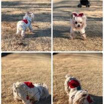 初・公園散歩♪の記事に添付されている画像