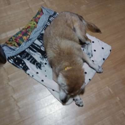 睡魔とオヤツの記事に添付されている画像