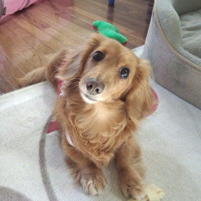 犬を飼いたいの記事に添付されている画像