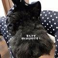 #犬との生活の画像
