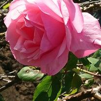 畑で咲いてる花の記事に添付されている画像