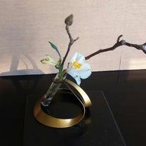 お花と景色に癒されました(^-^)の記事に添付されている画像