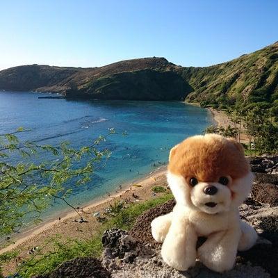 Hawaii☆BOOちゃん☆ハナウマ湾☆ピエンヌミニミニ手のひらの景色シリーズ♪の記事に添付されている画像
