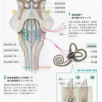Ⅱ.神経系の構造と機能 特殊感覚を伝える神経の構造 平衡覚伝導路のしくみの記事に添付されている画像