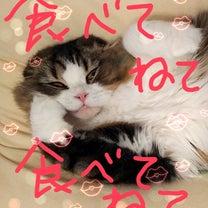 LOVE♡VLS注射の記事に添付されている画像