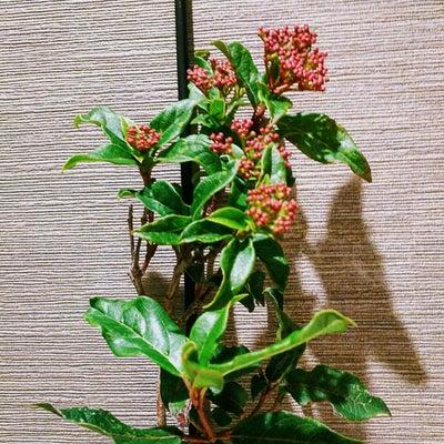 1月17日(木)おむすびの日の記事に添付されている画像
