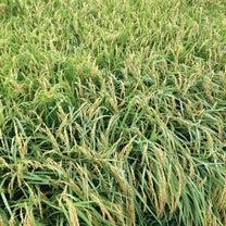 レキシ - 狩りから稲作への記事に添付されている画像