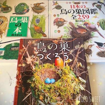 鳥の巣の話し。の記事に添付されている画像