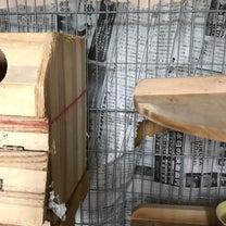もみじママ巣作りしてる⁉️の記事に添付されている画像