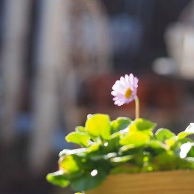 新入りの薔薇&花々♪の記事に添付されている画像