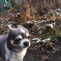 ❣️ 1月  18 日   寒いから散歩はイヤだよー⁉️の記事に添付されている画像