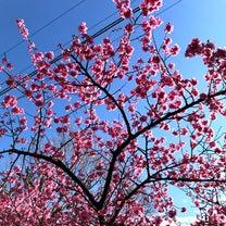 桜咲くの記事に添付されている画像