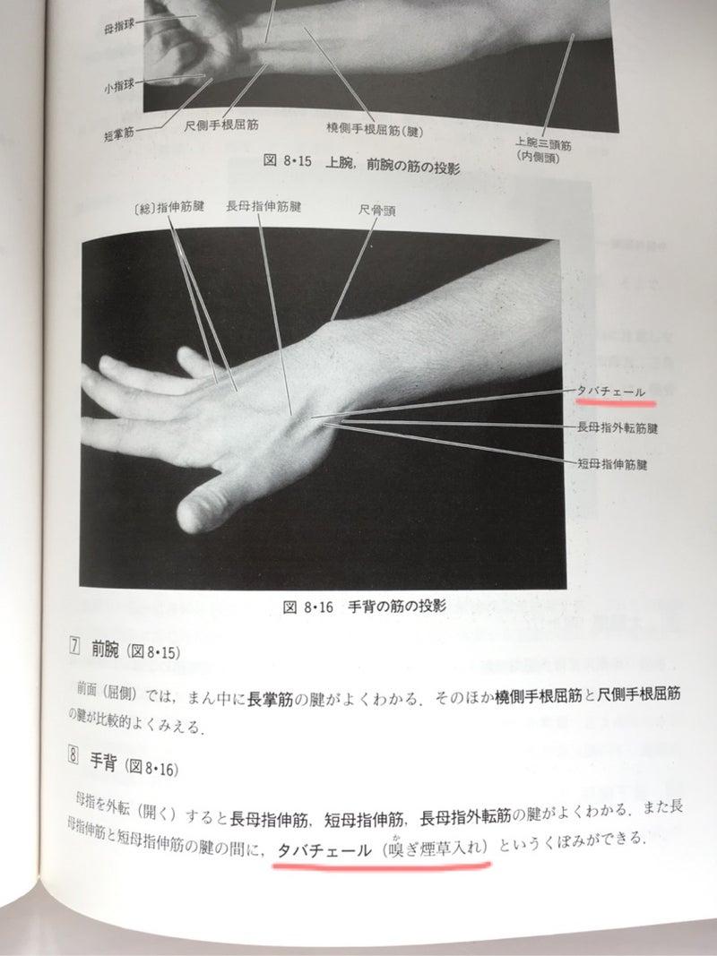 タバコ 的 解剖 入れ 学
