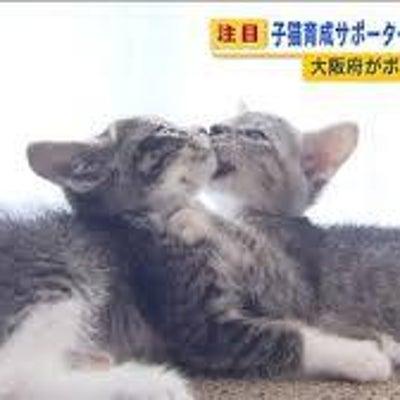 """""""子猫育成サポーター""""で殺処分ゼロへの記事に添付されている画像"""