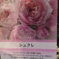 可愛いバラをお迎えしたの記事に添付されている画像