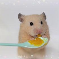 命の危険 無茶なダイエット法の記事に添付されている画像