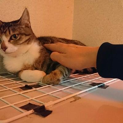 新中野にある保護猫カフェ「Miagolare」さんに行ってきましたの記事に添付されている画像
