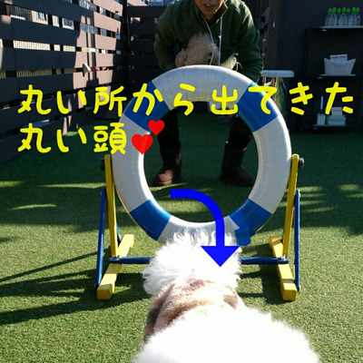 えっちゃんとカンフー君♡の記事に添付されている画像