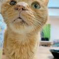 #猫のいる生活の画像