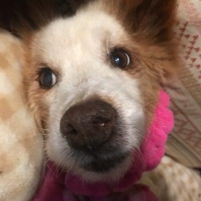 ラッキー・茶々・ユキ、シニア犬猫たちの通院の記事に添付されている画像
