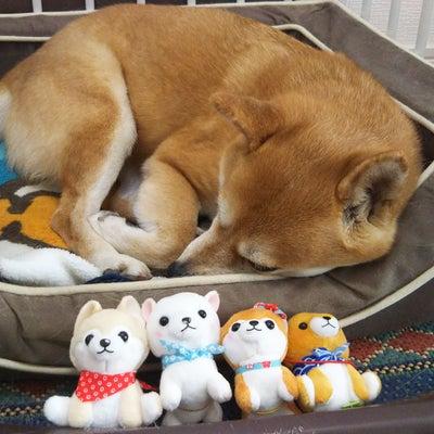 リンちゃん、お昼寝の記事に添付されている画像