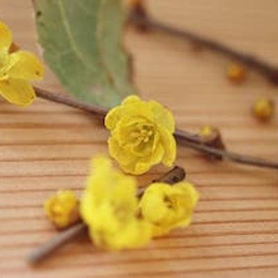 四季のお花をドライフラワーにの記事に添付されている画像
