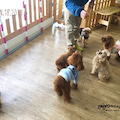 #犬の保育園の画像
