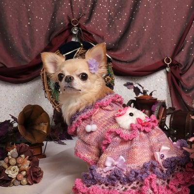 愛犬撮影会の記事に添付されている画像