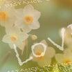 「ガレキに咲いた花がユラユラ見てる」1.17の記憶。