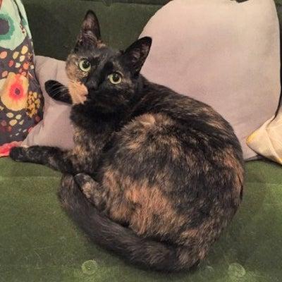 【幸せ通信】四年前…寒さと空腹と孤独に震えていた仔猫の「シェルちゃん」が、更に幸の記事に添付されている画像
