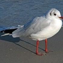渡り鳥の季節の記事に添付されている画像
