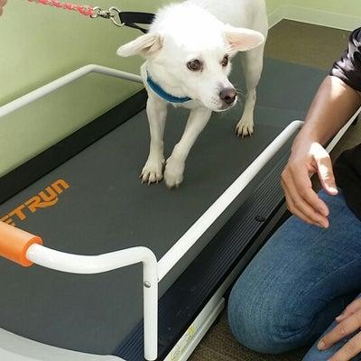 レジーナリゾートdogフィットネスの記事に添付されている画像