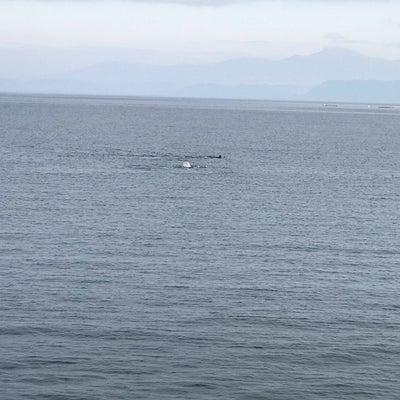 イルカが見れたよ(#^.^#)の記事に添付されている画像